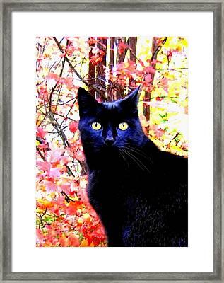Ziggy Framed Print by Will Borden