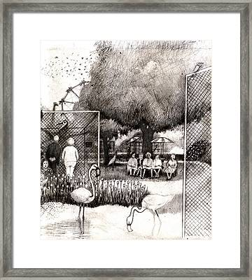 Zoo Framed Print by Andy  Mercer