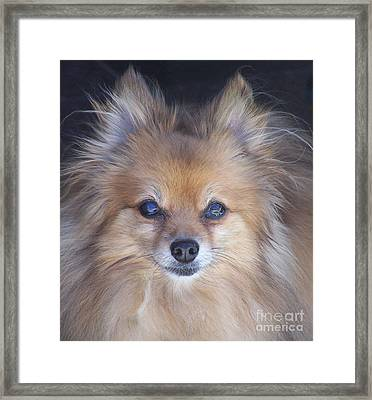 Zoom Framed Print by Brian  Commerford
