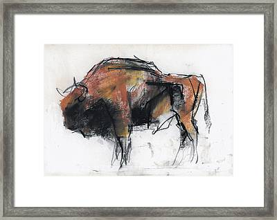 Zubre  Bialowieza Framed Print by Mark Adlington