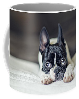 Boston Terrier Puppy Coffee Mug by Nailia Schwarz