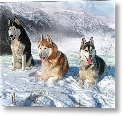Alaskan Malamute Metal Print by Trudi Simmonds