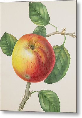 An Apple Metal Print by Elizabeth Jane Hill