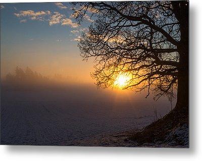 Sunbeams Pour Through The Tree At The Misty Winter Sunrise Metal Print by Aldona Pivoriene