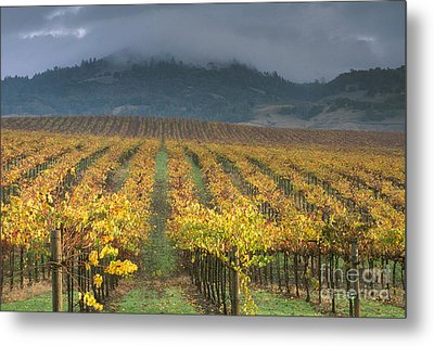 Clouds Over Alexander Valley Vineyard On A Fall Morning Metal Print by Gary Crabbe