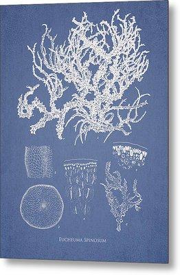 Eucheuma Spinosum Metal Print by Aged Pixel