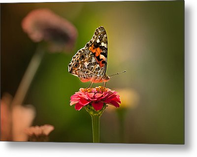 Painted Lady Summer Profile Metal Print by Sylvia J Zarco