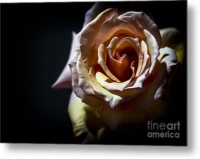 Painted Rose Metal Print by Holly Martin