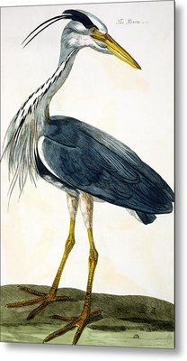 The Heron  Metal Print by Peter Paillou