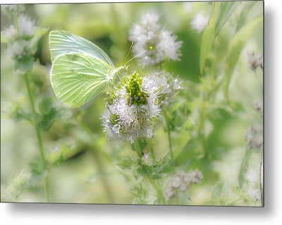 White Cabbage Butterfly's Garden Metal Print by Sylvia J Zarco