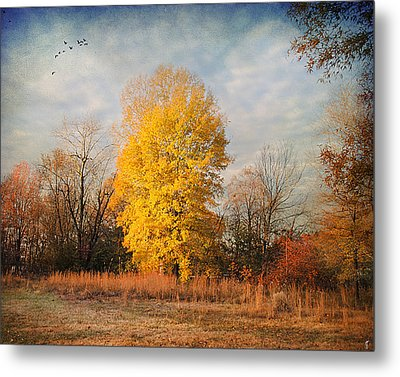 A Golden Moment Metal Print by Jai Johnson