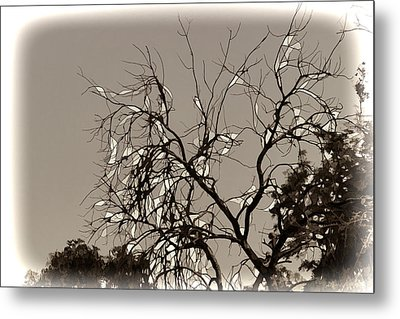 A Tree And Branches With No Leaves Metal Print by Ashish Agarwal