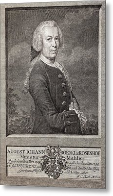 August Von Rosenhof Metal Print by Paul D Stewart