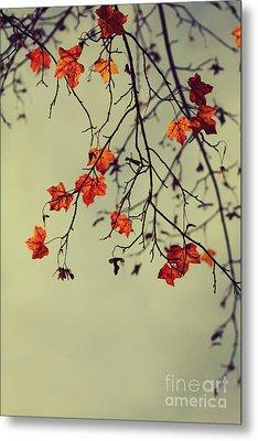 Autumn Metal Print by Diana Kraleva
