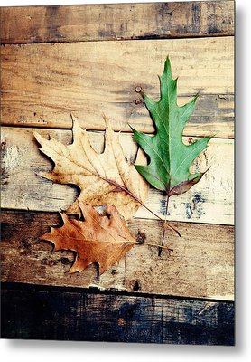 Autumn Leaves Ablaze With Color Metal Print by Kim Fearheiley