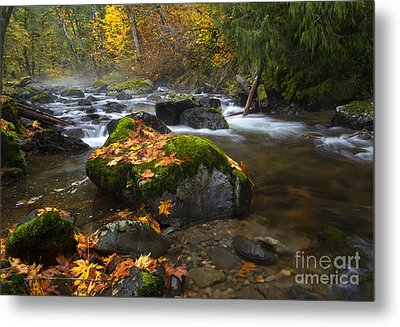 Autumn Stream Metal Print by Mike Dawson