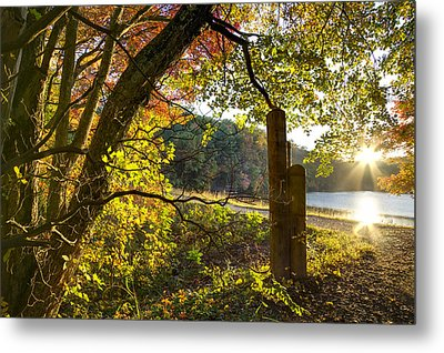 Autumn Trail Metal Print by Debra and Dave Vanderlaan