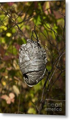 Bald-faced Hornet Nest Metal Print by Linda Freshwaters Arndt