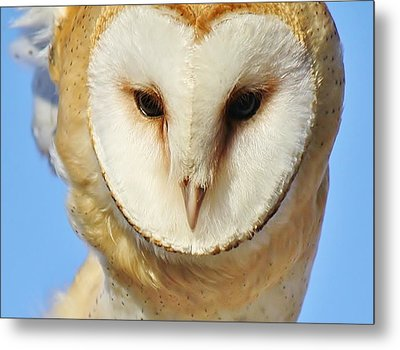 Barn Owl Up Close Metal Print by Paulette Thomas