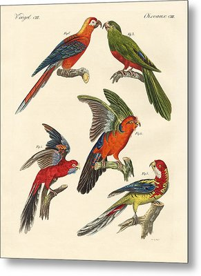 Beautiful Parrots Metal Print by Splendid Art Prints