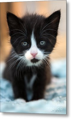Blake And White Kitten Metal Print by Iris Richardson