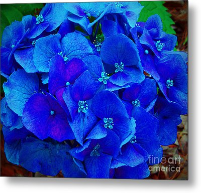 Blue Beauty Metal Print by Annette Allman
