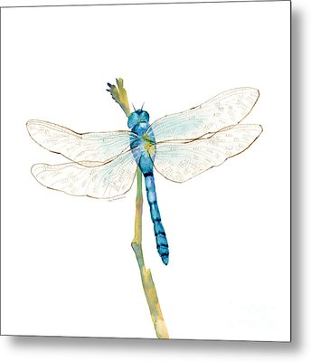 Blue Dragonfly Metal Print by Amy Kirkpatrick