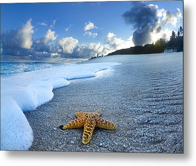 Blue Foam Starfish Metal Print by Sean Davey