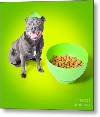 Blue Staffie With His Bowl Of Food Metal Print by Jorgo Photography - Wall Art Gallery
