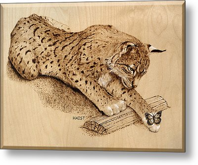 Bobcat And Friend Metal Print by Ron Haist
