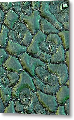 Broccoli Metal Print by Stefan Diller