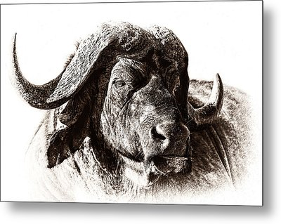 Buffalo Sketch Metal Print by Mike Gaudaur