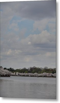 Cherry Blossoms - Washington Dc - 011333 Metal Print by DC Photographer
