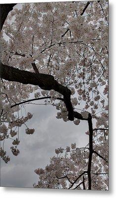 Cherry Blossoms - Washington Dc - 011341 Metal Print by DC Photographer