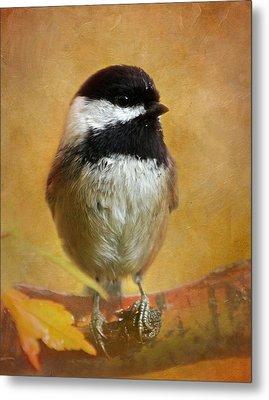 Chickadee Metal Print by Angie Vogel