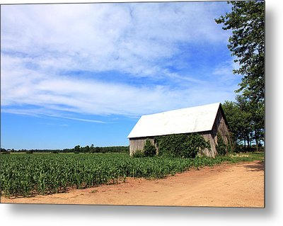Corn Rows Metal Print by Sheryl Burns