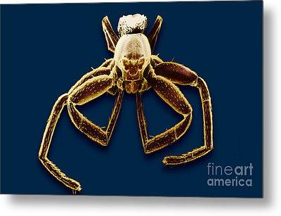Crab Spider Metal Print by David M. Phillips