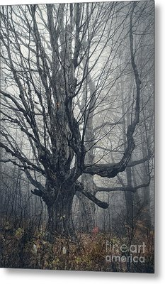 Dark Forest Metal Print by HD Connelly