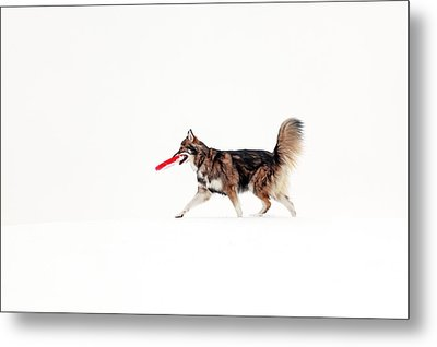 Dog In The Snow Metal Print by Grant Glendinning