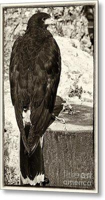 Eagle Metal Print by Jose Elias - Sofia Pereira