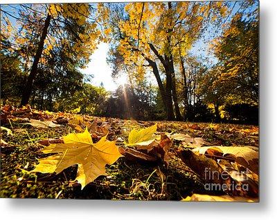 Fall Autumn Park. Falling Leaves Metal Print by Michal Bednarek