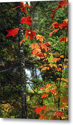 Fall Forest And River Metal Print by Elena Elisseeva
