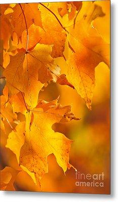 Fall Maple Leaves Metal Print by Elena Elisseeva