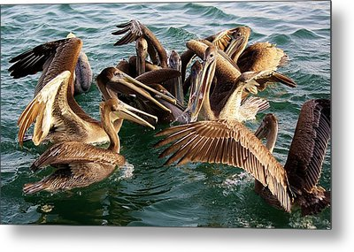 Fish Fight Metal Print by Paulette Thomas