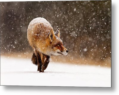Fox First Snow Metal Print by Roeselien Raimond
