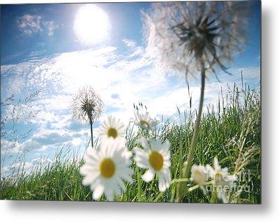 Fresh Meadow Background Metal Print by Michal Bednarek