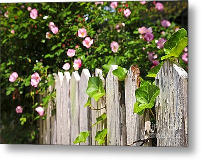 Garden Fence With Roses Metal Print by Elena Elisseeva