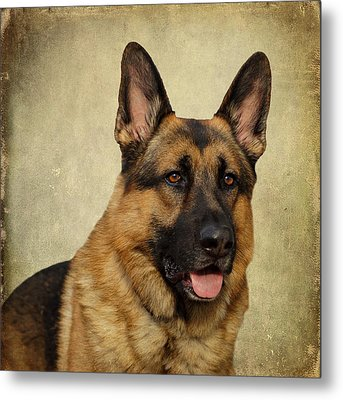 German Shepherd Portrait Metal Print by Sandy Keeton