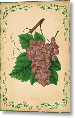 Grapes Illustration Metal Print by Indian Summer