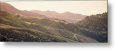 High Angle View Of A Vineyard Metal Print by Panoramic Images